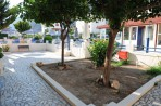 Chrysanthi studio & apartments foto 6
