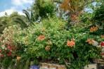 Bougainvillea Hotel foto 17