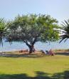 Mimoza Beach Hotel foto 8