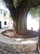 Strinilas - ostrov Korfu foto 7
