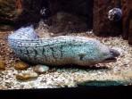 Cretaquarium (mořské akvárium) - ostrov Kréta foto 9