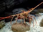 Cretaquarium (mořské akvárium) - ostrov Kréta foto 13