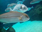 Cretaquarium (mořské akvárium) - ostrov Kréta foto 15