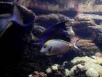 Cretaquarium (mořské akvárium) - ostrov Kréta foto 6