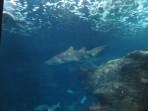 Cretaquarium (mořské akvárium) - ostrov Kréta foto 4