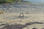 Marathonisi (Želví ostrov) - ostrov Zakynthos foto 15