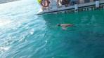 Marathonisi (Želví ostrov) - ostrov Zakynthos foto 8