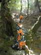 Údolí motýlů (Petaloudes) - ostrov Rhodos foto 2