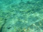 Pláž Kolymbia - ostrov Rhodos foto 31