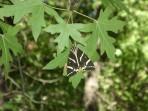 Údolí motýlů (Petaloudes) - ostrov Rhodos foto 13