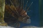 Akvárium Faliraki - ostrov Rhodos foto 23