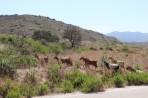 Příroda na ostrově Rhodos foto 5