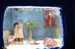 Akvárium Faliraki - ostrov Rhodos foto 5