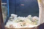 Akvárium Faliraki - ostrov Rhodos foto 6