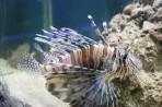 Akvárium Faliraki - ostrov Rhodos foto 7