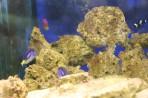Akvárium Faliraki - ostrov Rhodos foto 8