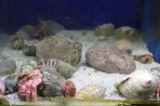 Akvárium Faliraki - ostrov Rhodos foto 9