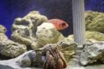 Akvárium Faliraki - ostrov Rhodos foto 10