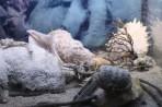 Akvárium Faliraki - ostrov Rhodos foto 12