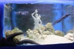 Akvárium Faliraki - ostrov Rhodos foto 13