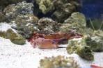 Akvárium Faliraki - ostrov Rhodos foto 14