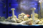 Akvárium Faliraki - ostrov Rhodos foto 15