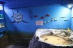 Akvárium Faliraki - ostrov Rhodos foto 17
