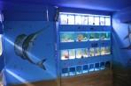 Akvárium Faliraki - ostrov Rhodos foto 18