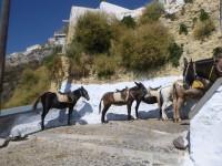Obézní turisté se už v Řecku na oslech nesvezou