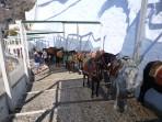Obézní turisté se už v Řecku na oslech nesvezou foto 1