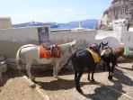 Obézní turisté se už v Řecku na oslech nesvezou foto 2