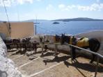 Obézní turisté se už v Řecku na oslech nesvezou foto 5