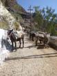 Obézní turisté se už v Řecku na oslech nesvezou foto 4