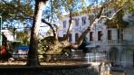 Hippokratův platan - ostrov Kos foto 5