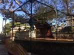 Hippokratův platan - ostrov Kos foto 6