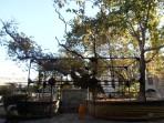 Hippokratův platan - ostrov Kos foto 4